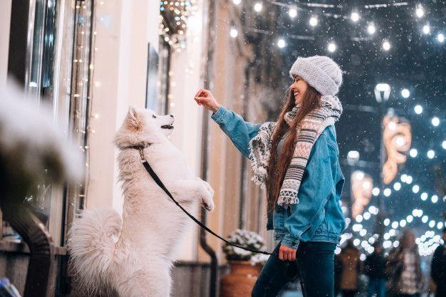 Principais erros na hora de adestrar cachorro
